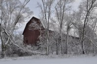 Abandoned barn in patch of trees