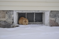 A cat huddles in the shelter of a window-well at a farmhouse