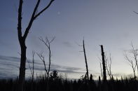 Moonrise among dead trees
