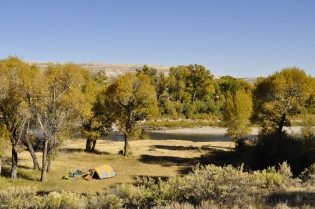 Another cottonwood campsite