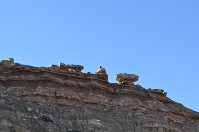 An eagle perches on a rock outcropping