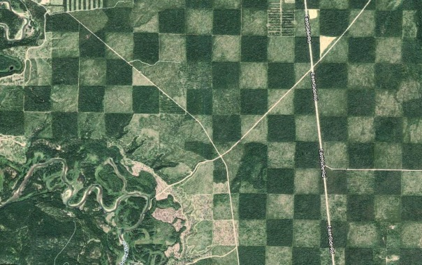Checkerboard Aerial Forest