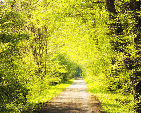 forest-path-in-spring-with-bright-green-trees-matthias-hauser