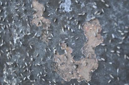 Rock of Age's Biological Coating