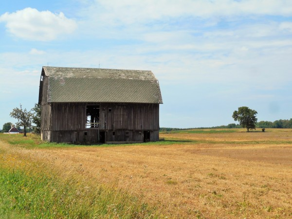 Barns dot the landscape of central Michigan farm country